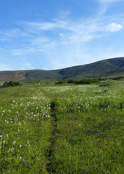 Wildflower Wonders: Where to find the best blommetjies this Spring