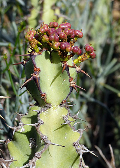 #SecretSeason: Winter at Karoo Desert National Botanical Gardens
