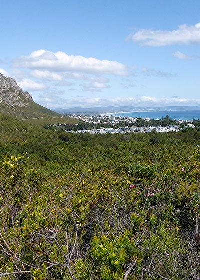 A Botanist's Paradise: Exploring Fernkloof Nature Reserve