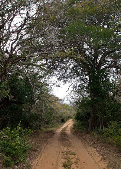 Forests of South Africa