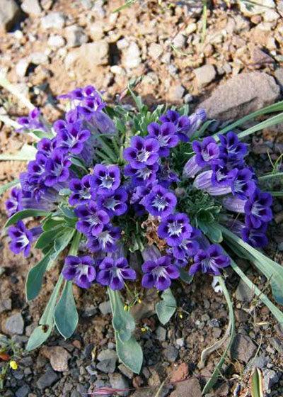 Spring Flower Watch: Nieuwoudtville Wildflower Reserve