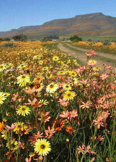 Spring Flower Watch: Biedouw Valley