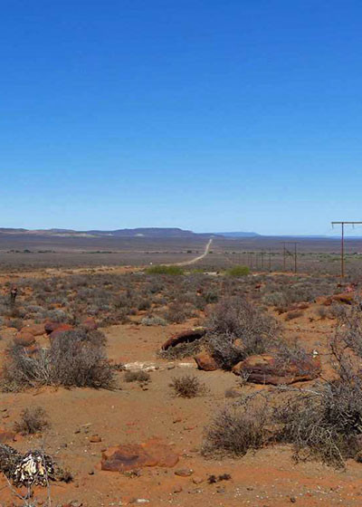 Earth Overshoot Day: Climate Crisis Impacts on South Africa's Plant Diversity