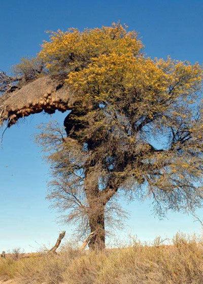 South Africa's Bushveld Vegetation: An Introduction