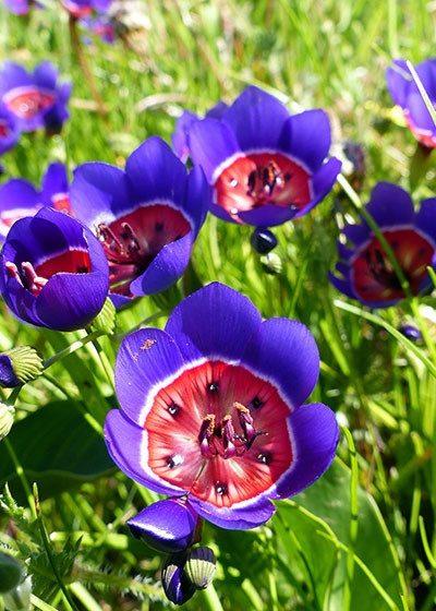 Spring Flower Watch: Tienie Versfeld Nature Reserve
