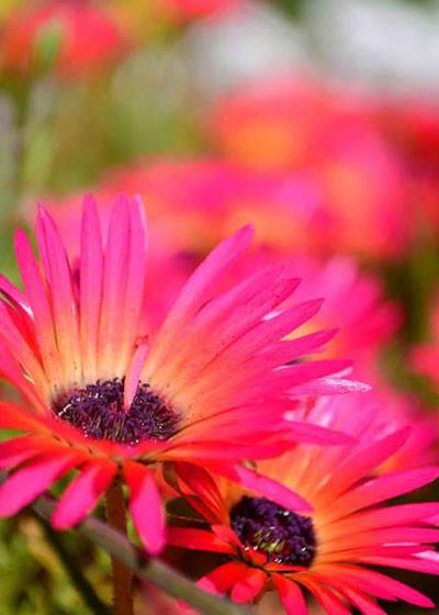 Spring Flower Watch: West Coast National Park