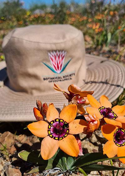 Spring Flower Watch: Hantam National Botanical Garden