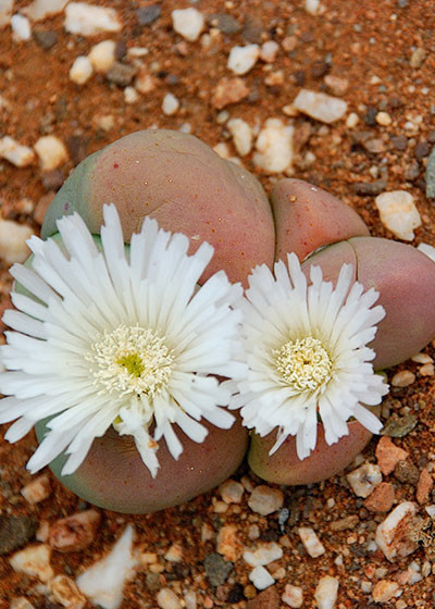 An introduction to the Little Karoo