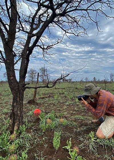 Summer Flower Watch in Lower Sabie, Kruger National Park