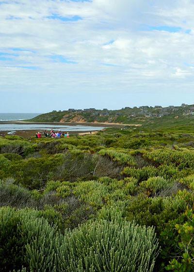 A rare habitat for rare plants: The Cape's coastal dunes