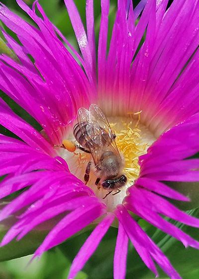 Get your garden buzzing!