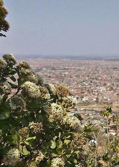 Mamelodi's hill of dreams